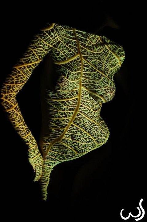 leaf; Hot
